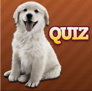 solution Races de chien Quiz tous niveaux