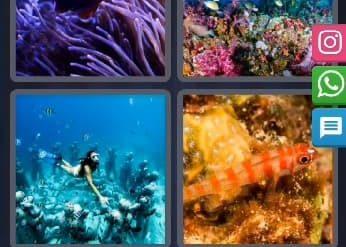 4 Images 1 Mot Énigme Journalière indonésie 18 Février 2020