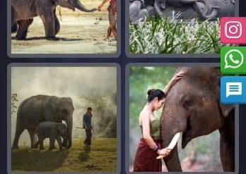 4 Images 1 Mot Énigme Journalière indonésie 24 Février 2020